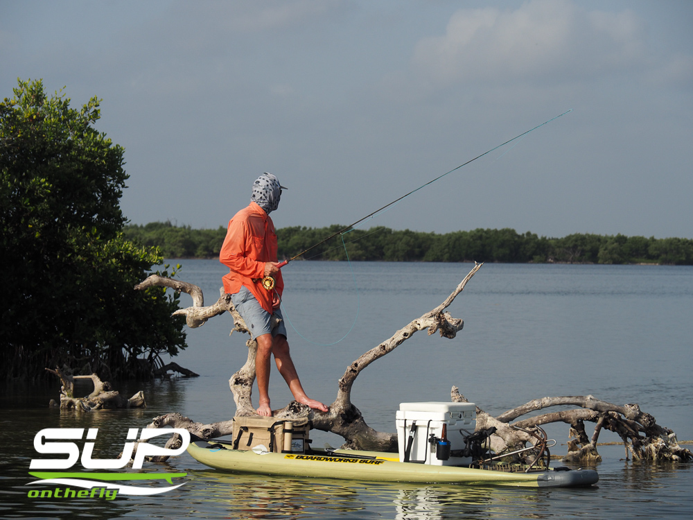 Fly Fishing in Rio Lagartos Yucatan