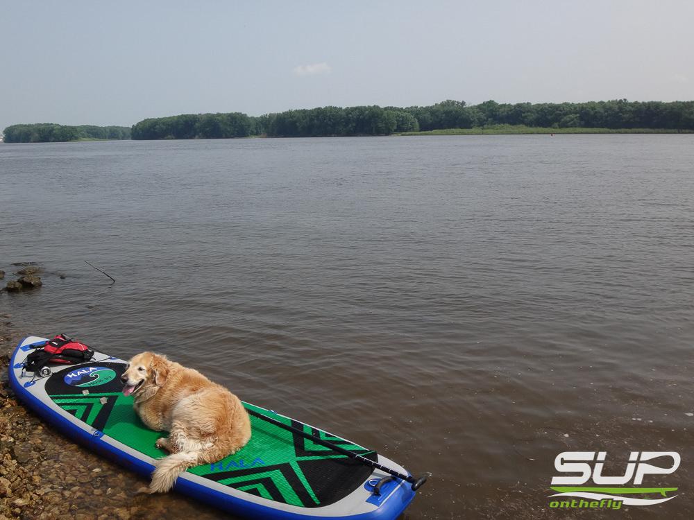 Dog Boarding In Mississippi